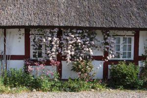 den österländska korsvirkesgårdens blommande vägg