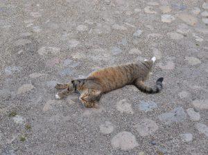 katt på gruset