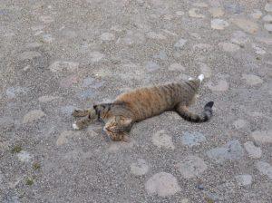 Katt på kullersten