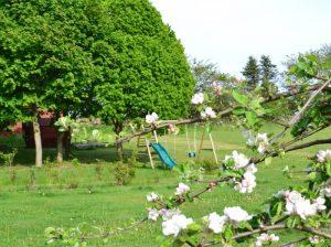 Äppleblommor och gungor