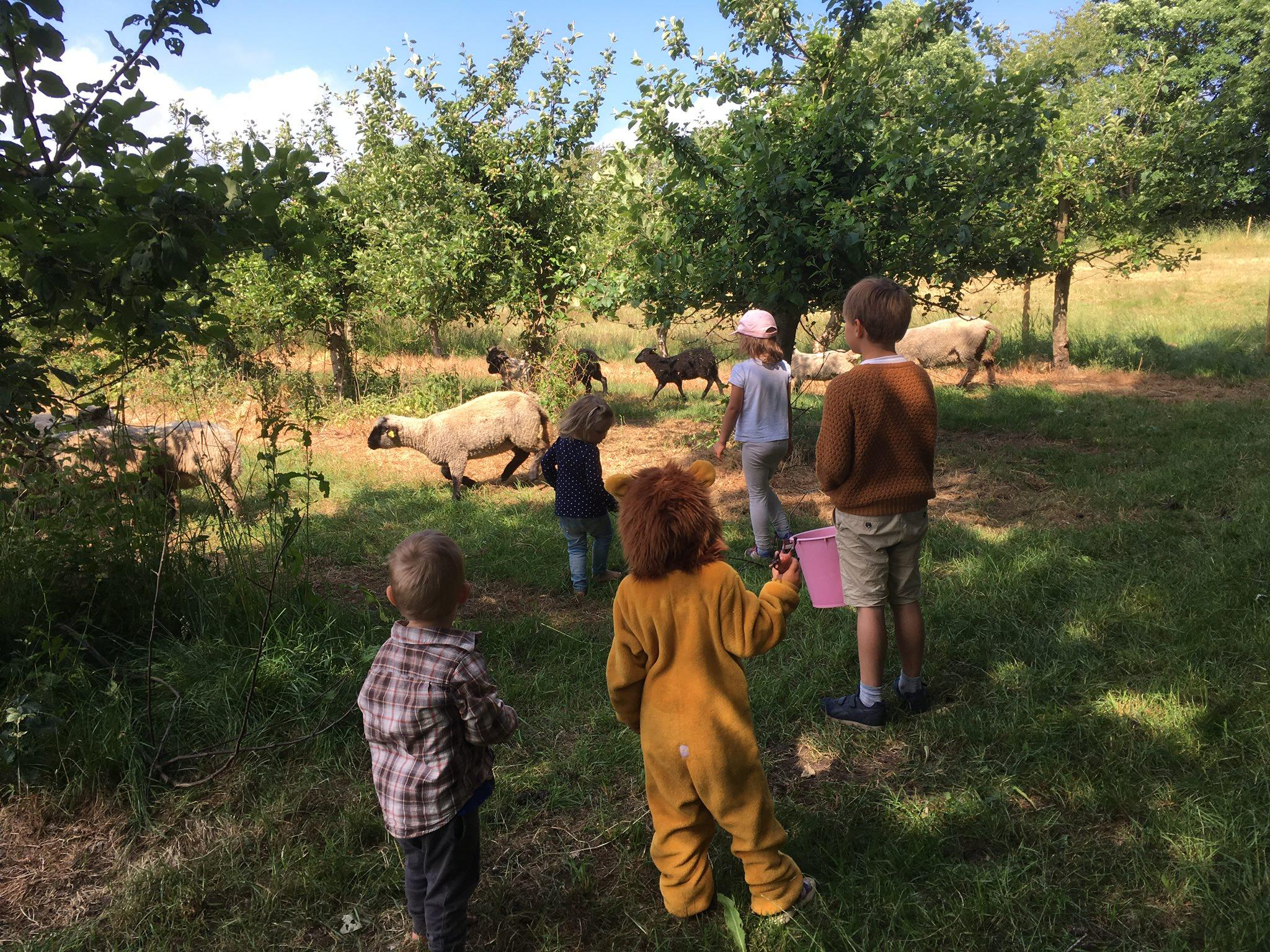 Barn matar fåren